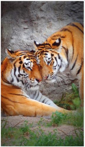 Обогреватель настенный Тигр